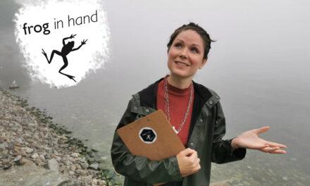Frog in Hand – Summer Season Announcement 2021
